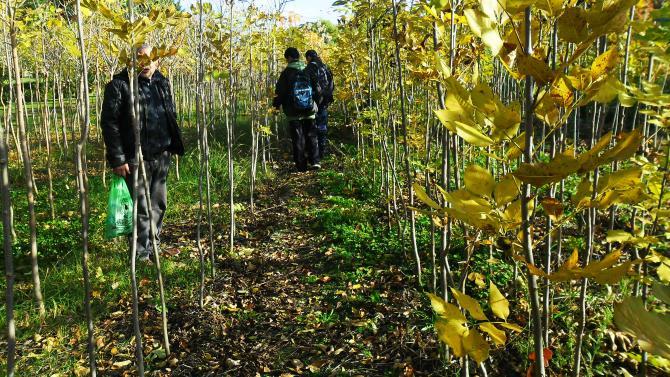 Espacios Verdes Jardineria Sitio Oficial Del Municipio